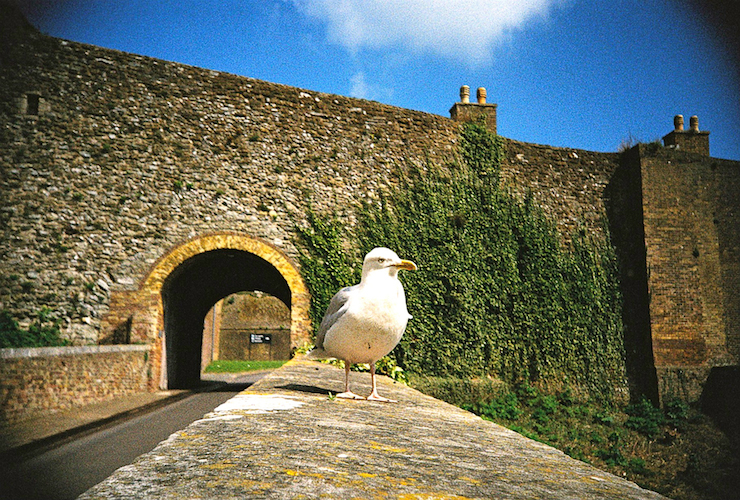 A particularly bold seagull at Dover Castle